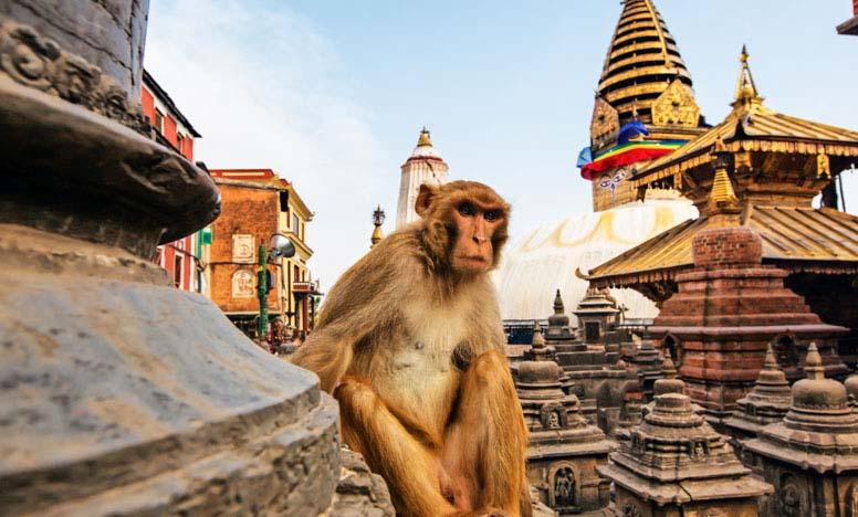 Kathmandu And Chitwan Tour